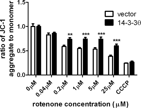 14-3-3θ overexpression reduces rotenone-induced disruption of mitochondrial membrane potential.Vector control and 14-3-3θ cells were treated with varying doses of rotenone or 10 µM carbonyl cyanide 3-chlorophenylhydrazone (CCCP), a mitochondrial toxin, for 24 hours. Mitochondrial membrane potential was assayed by the JC-1 assay. Ratio of aggregated JC-1 (red) to monomer JC-1 (green) for each condition was normalized to that ratio for the corresponding untreated cells. Results reflect three independent experiments with three replicates per experiment. Error bars reflect SEM. **p<0.01, ***p<0.001 (Bonferroni's multiple comparison test).