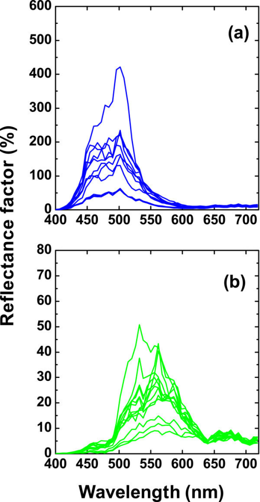 The reflectance factor (%) as a function of the wavelength measured with the hyperspectral system. (a) Examples of the M. didius (blue). (b) Examples of the P. palinurus (green). Each spectrum corresponds to the reflectance factor in a different CCD's pixel and thus in a different spatial position. In both cases, only a fraction of data is represented.
