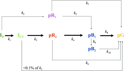 Chemical kinetic mechanisms and rate coefficients of the PYP photocycle. At temperatures up to 313 K, eight rate coefficients (k1 to k8) and five intermediate states plus the dark state contribute. The occupancy of pB2 is very low and cannot be observed. Above 313 K the early intermediates are not detected because the time series start around 100 ns. pB2 accumulates to a detectable extent and the rate coefficients k9 and k10 contribute in addition. The main reaction pathway in PYP is indicated by bold arrows. The direct path from ICT to pG is irrelevant (dashed arrow).