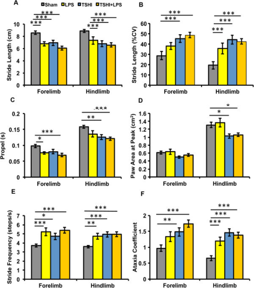 Prenatal injury significantly impacts motor function in juvenile rats. Digigait analyses at postnatal day 28 demonstrate significant motor impairment and gait abnormalities in both forelimbs and hindlimbs of lipopolysaccharide (LPS; n = 13), transient systemic hypoxia-ischemia (TSHI; n = 14) and TSHI + LPS (n = 21) rats, compared to shams (n = 18). Impairment includes (A) decreased stride length, (B) increased stride variation, (C) decreased time in the propel phase, (D) decreased paw area at peak stride, consistent with toe-walking, and (E) increased stride frequency, which all culminate in (F) increased ataxia coefficients. *P < 0.05, ** P < 0.01, *** P < 0.001, versus shams. CV, Coefficient of variation.