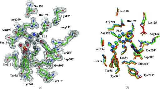 Active site of A. baumannii alanine racemase. (a) 2Fo− Fc electron-density map of the active site contoured at 1.0σ with isomesh map shown (1.6 Å carve). The main-chain and side-chain atoms of the AlrAba active-site residues are depicted as sticks. C atoms are green, O atoms red, N atoms blue, S atoms yellow and phosphates orange. The PLP cofactor is depicted as a ball-and-stick model in which C atoms are coloured black. (b) Superposition of the active-site residues of alanine racemases from A. baumannii (green), B. henselae (blue), P. aeruginosa (red) and E. coli (orange). For A. baumannii, a hybrid view is depicted with residues from monomer B, except for the side chain of His159 which is included from monomer A. The PLP cofactors from each structure are depicted as ball-and-stick models. Primes denote residues contributed by the second monomer. The superposition was performed using the residue ranges stated in Table 2 ▶. This figure was produced in PyMOL (DeLano, 2002 ▶).