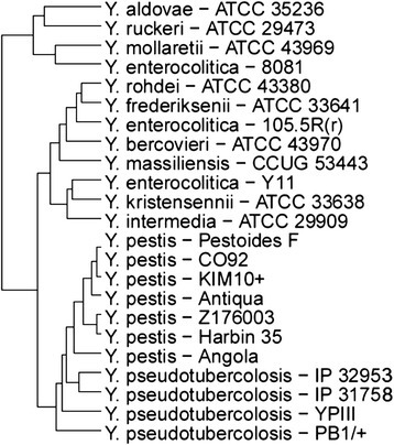 Phylogenetic tree constructed by from virulence gene profiles with PathoProT.