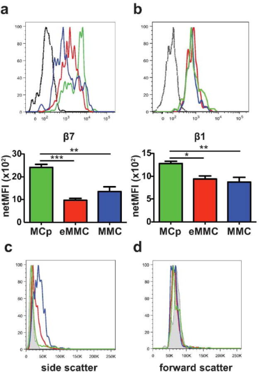 Expression of β7 and β1 integrins and forward and side scatter characteristics of inducible lung MC populations at D7 after challenges. (a) Representative histograms (top panel) and mean (± SEM) net MFI (bottom panel) of β7 integrin expression by the 3 populations of lung MCs: MCp -green, eMMC -red and MMC -blue; black dotted line -isotype control. Net MFI was determined by subtracting the value of the isotype control. (b) Representative histograms (top panel) and mean (± SEM) net MFI (bottom panel) of β1 (CD29) integrin expression by the 3 populations of lung MCs (top panel) colored as in a. (c) Representative histograms show the side scatter profile of the 3 lung MC populations colored as in a. Grey shaded area indicates immature spleen MCp. (d) Representative histograms show the forward scatter profile of the 3 lung MC populations compared to spleen MCp as in c. Histograms in c and d show the mean value from 2-3 mice/group from one of 5 experiments. Bar graphs present means ± SEMs from 3-5 separate experiments with 5-13 mice per group.