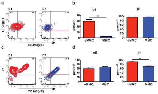 Expression of α4, αE, β7, and β1 integrins on the constitutive and inducible MC populations in the trachea. (a) Representative contour plots presenting the expression of α4 and β1 integrins on eMMCs (red) on D1, and MMCs (blue) on D7 after challenges. (b) Mean (±SEM) percentage of cells positive for α4 and β1 integrins in the 2 MC populations, D1 eMMCs, and D7 MMCs as in a.(c) Representative contour plots presenting the expression of αE and β7 integrins colored as in a. (d) Mean (± SEM) percentage of cells positive for αE and β7 integrins in the 2 MC populations colored as in a. Data are from 4 experiments with 4-8 mice per group. **p < 0.001.