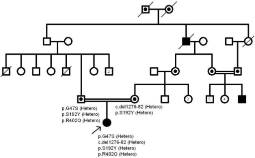 The pedigree of patient 15. Both p.S192Y and p.R402Q together with the p.G47S are not pathogenic in the patient's father according to the above pedigree.