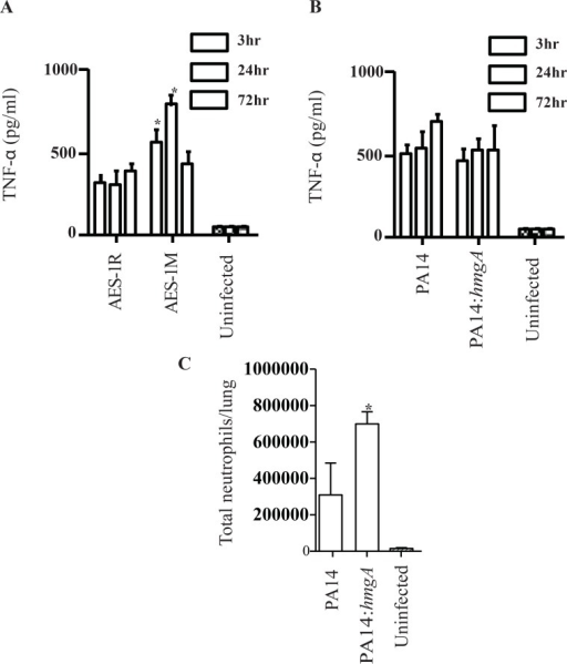 Mouse TNF-α response to lung infection with AES-1R, AES-1M, PA14 and PA14ΔhmgA, and neutrophil populations in PA14 and PA14ΔhmgA-infected mice.The TNF-α profile of P. aeruginosa-infected mice was determined in lung homogenates at 3-, 24- and 72-hrs post-infection by ELISA. A. AES-1M elicited a rapid and significantly greater TNF-α response compared to AES-1R at 3 and 24-hr, and both responses were still at >400pg/ml at 72hr despite the absence of bacteria in lungs. B. Both PA14 and PA14hmgA elicited a rapid TNF-α response compared to control uninfected mice by three hrs post-infection however there was no significant difference between them. The significances of differences between strains were determined by ANOVA * p<0.0001 vs. AES-1R. C. Mice were infected with 106 CFU of either wildtype PA14 or PA14ΔhmgA and lungs were harvested at 72-hrs post-infection. Single cells suspensions were stained and analysed by FACS. Neutrophil populations were identified based on their CD11b+Ly6G+ phenotype. Total cell numbers in the lung were determined based on the number of stained cells. Infection with PA14ΔhmgA was marked by a significant increase in the number of neutrophils in the lung compared to mice infected with PA14. The significances of differences between strains were determined by ANOVA * p<0.05 vs. PA14 WT.