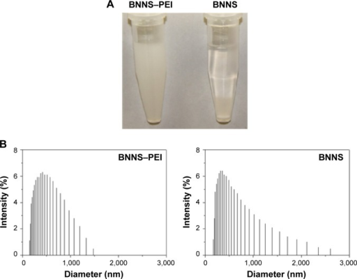 Characterizations of the BNNS and BNNS–PEI complexes.Notes: (A) Dispersed BNNS and BNNS–PEI complexes in PBS after statically placed for 24 hours. (B) Hydrodynamic diameters distribution of BNNS and BNNS–PEI complexes in PBS.Abbreviations: BNNS, boron nitride nanospheres; PBS, phosphate-buffered saline; PEI, polyethyleneimine.