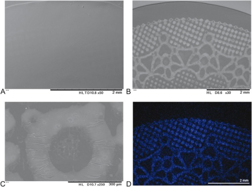 Scanning electron microscopy views and mapping analysis of EYE COFFRET 1-DAY UV. (A) The surface of the eyelid side is smooth. (B) The print design is apparent on the posterior side, and the pattern is uniform. (C) A coated thin layer is wrinkled. (D) Blue shows the distribution of chlorine.
