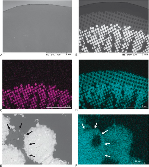 Scanning electron microscopy views and mapping analysis of EVER COLOR 1-DAY NATURAL. (A) The surface of the anterior side is smooth. (B) Colorants are deposited on the posterior side. (C) Purple shows the distribution of titanium. (D) Light blue shows the distribution of chlorine. (E) Black arrows show exuded chlorine in high magnification. (F) White arrows show exuded chlorine.