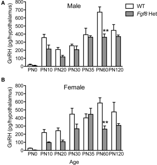 Hypothalamic GnRH content in PN0–120 male (A) and female (B) WT and Fgf8 Het mice. In both sexes, GnRH contents were significantly reduced in Fgf8 Het mice on PN60. Each bar = mean ± SEM; N = 3–5 for PN0 and 5–11 for other ages. **P < 0.01 compared to WT of the same age.
