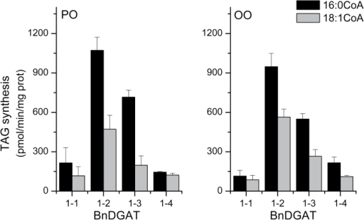 Selectivity of BnDGAT1 isozymes with equimolar acyl-CoA substrates. Microsome aliquots from the yeast TAG mutant H1246 expressing the indicated BnDGAT1 isozyme were supplied with [14C]-palmitoyl-CoA and simultaneously with [3H]-oleoyl-CoA, along with either 1-palmitoyl-2-oleoyl-sn-glycerol (PO-DAG) or dioleoyl-sn-glycerol (OO-DAG). 15 µM of each acyl-CoA were supplied. The DGAT1 activity was calculated based on radioactivity incorporated into TAG; results are means ±SD, n=3.