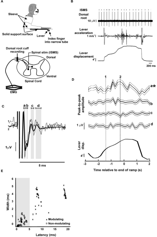 Dorsal Root Potentials Evoked By Intra Spinal Micro Sti Open I