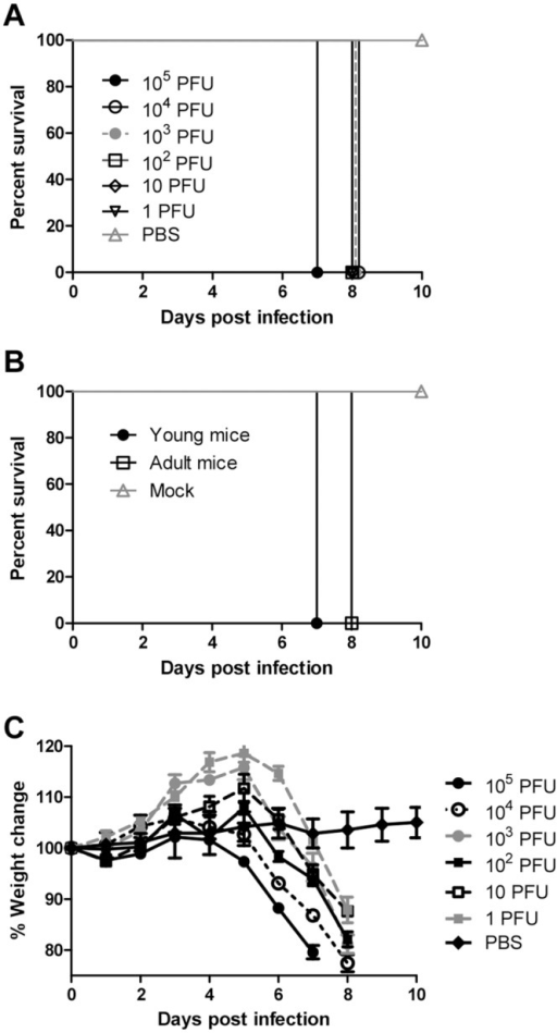 ZIKV causes mortality and morbidity in AG129 mice.Kaplan-Meier curves illustrate the susceptibility of AG129 mice to ZIKV. Young mice were inoculated f.p. with several doses (n = 3 for doses 105−103 PFU and n = 6 for doses 10 and 1 PFU; 102 PFU was done as two separate independent replicates with n = 3 for each) of ZIKV (A). All mice challenged with 104−1 PFU succumbed 8 d PI. Young (n = 4) and adult mice (n = 6) were inoculated f.p. with 105 PFU of ZIKV (B). Mice were monitored until day 10 PI. Changes in weight were calculated daily for ZIKV- and mock-infected mice (C). Error bars represent standard error of the mean.