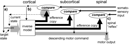 Schematic model of reactions to somatosensory input at the spinal (right), subcortical (middle), and cortical (left) levels. Loop a) is a feedback-based updating of the motor command at the highest level (target state). Loop b) represents the comparison of somatosensory feedback with efference copy used to update the inverse model (square). The gray circle represents forward model operations used to facilitate this comparison and to update the current state. Loop c) is a hypothetical comparison of somatosensory input with efference copy at the level of the spinal cord. This could give rise to functionally appropriate modifications to motor output at spinal reflex latencies.