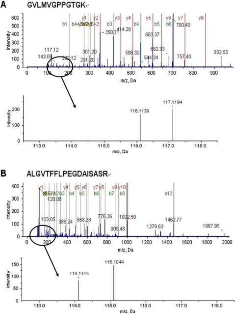 Representative MS/MS spectra of FtsH.(A) A peptide, GVLMVGPPGTGK, derived from FtsH in cells incubated without and with apidaecin IB for 1 h. (B) a peptide, ALGVTFFLPEGDAISASR, derived from FtsH in cells incubated without and with apidaecin IB for 2 h. The ion assignments are as follows: iTRAQ tags 116, Control 1 h; iTRAQ tags 117, Apidaecin IB-incubated 1 h; iTRAQ tags 114, Control 2 h; iTRAQ tags 115, Apidaecin IB-incubated 2 h.