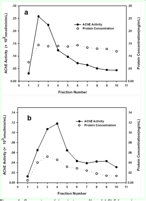 Comparison of the elution profiles of AChE from the procainamide affinity column (1.0 × 5.5 cm) between Rhopalosiphum padi (a) and Sitobion avenae (b). Flow rate was 16 mL/h, and 1.0 mL fractions except fraction 1, which was 5.0 mL, were collected after the elution buffer containing 0.05 M tetraethylammonium iodide was applied. High quality figures are available online.