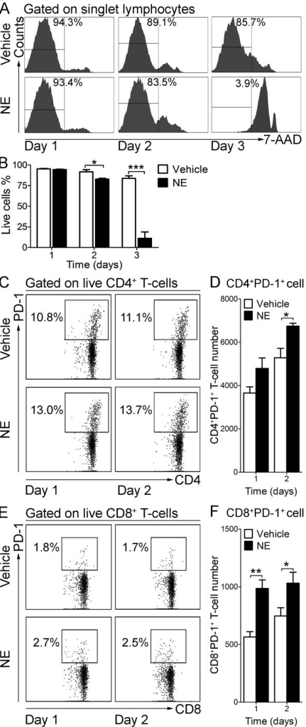 Norepinephrine (NE) up-regulates PD-1 expression on T-cells in vitro. Enriched splenic T-cells (106 cells/ml) were stimulated with 10 μM (NE) or its vehicle (Vehicle) in vitro for one to three days. Cells were collected and processed for flow cytometry. (A) Representative histograms show the 7-AAD fluorescence and the percentage of live cells (7-AAD−) in gated singlet lymphocytes. (B) Bar graph shows the mean ± SEM percentage of live cells (7-AAD−) following one to three days of in vitro culture with NE or vehicle. Experiments were performed in triplicate. *P < 0.05, ***P < 0.001, two-tailed Student's t-test. (C) Representative dot plots show the percentage of PD-1+ cells in gated live CD4+ T-cells. (D) Bar graph represents the mean ± SEM number of CD4+ PD-1+ live cells per well after one and two days of NE or vehicle treatment. (E) Representative dot plots show the percentage of PD-1+ cells in gated live CD8+ T-cells. (F) Bar graph represents the mean ± SEM number of live CD8+PD-1+ cells per well after one and two days of NE or vehicle treatment. Ten thousand events gated on singlet lymphocytes were collected. Experiments were performed in triplicate. *P < 0.05, **P < 0.01, one-tailed Student's t-test.