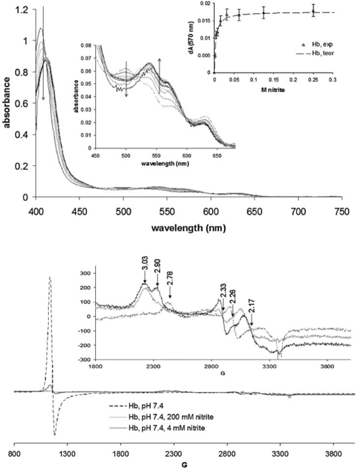 Top panel: UV-vis spectra of hemoglobin (100 µM) in the presence of varying amounts of nitrite; shown as inset is a binding curve whose theoretical fit indicates a binding constant of 3 mM. Bottom panel: EPR spectra of Hb in the presence and absence of nitrite, Conditions are as in Fig. 2.