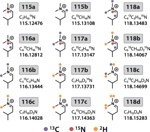 The 12-plexDiLeu reporter ion structures showing stable isotopepositions.