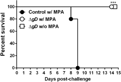 ΔgD−/+gD−1-vaccinated cycling mice are protected against intravaginal HSV-2 challenge.C57BL/6 mice were treated (w/MPA) or not (w/o MPA) with medroxyprogesterone (MPA) 5 days previous to subcutaneous prime and boost 3 weeks apart either with HSV-2 ΔgD−/+gD−1 (ΔgD) or VD60 cell lysate (Control). 16 days after boost, all mice were treated with MPA and 5 days later challenged intravaginally with an LD90 of wild-type HSV-2(4674) (n = 5 mice per group). Statistical significance was measured by log-rank Mantel–Cox test; ***p < 0.001, treatments vs Control.DOI:http://dx.doi.org/10.7554/eLife.06054.006