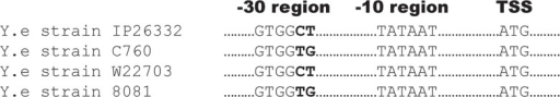 Multiple sequence alignment of the promoter region ofblaA ofY.enterocolitica biovar IA, 1B, 2 and4 strains.The transcription start site (TSS), -10 and -30 regions are shown. The -10region was conserved but variations were observed in the -30 region.