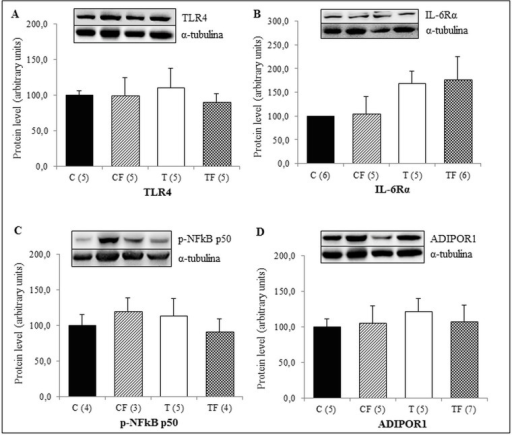 (A) Protein expression of TLR4 in the RET, (B) Protein expression of IL-6Rα in the RET, (C) Protein expression of NFκB p50 phosphorylated form in the RET (p-NFκB p50) and (D) Protein expression of ADIPOR1 in the RET. C—male offspring of dams fed control diet; CF—male offspring of dams fed control diet supplemented with oligofructose; T—male offspring of dams fed diet enriched with hydrogenated vegetable fat; TF—male offspring of dams fed diet enriched with hydrogenated vegetable fat supplemented with oligofructose. The number in parentheses refers to the sample value (Fig 4D: T group presented one outlier sample). Data are means ± SEMs. Results are expressed in arbitrary units, stipulating 100 as the control value.