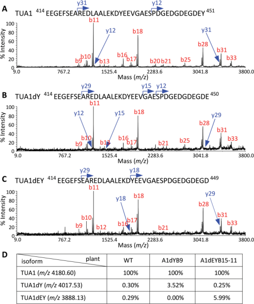 Proteomic analysis of tubulin-enriched xylem extracts. (A-C) MALDI TOF-TOF spectra of cyanogen bromide-cleaved C-terminal peptide of TUA1 (A), TUA1dY (B), and TUA1dEY (C) from WT, A1dYB9, and A1dEYB15 plants, respectively. (D) Relative abundance of the three TUA1 isoforms as determined by MALDI-TOF based on the C-terminal peptides. The peptide intensity of TUA1 was set to 100% in each sample.