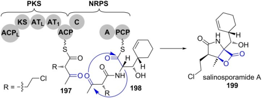 A bicyclisation mechanism forms a β-lactone and a pyrrolidinone and removes the precursor from the assembly line in salinosporamide A (199) biosynthesis [160–161].