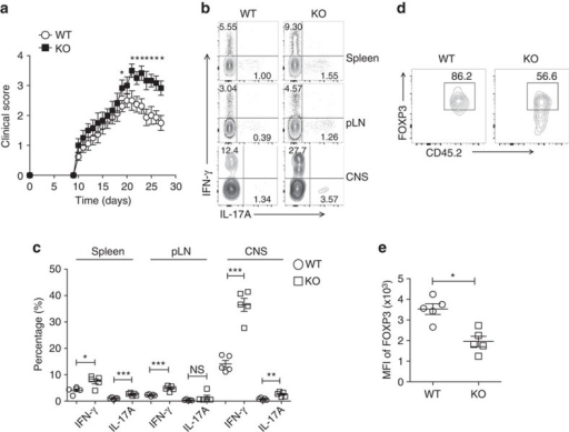Usp21fl/flFoxp3Cre mice developed more severe EAE symptoms.(a) Clinical severity of EAE in WT (n=8) and KO (n=7) mice was monitored for 27 days after immunization with MOG peptide. Statistical analysis of the clinical signs was further described in Table 1. (b) Representative figure shown the expression of IFN-γ and IL-17A by CD4+YFP− effector T cells in the spleen, peripheral lymph nodes and CNS from WT (n=5) and KO (n=5) mice on day 27 post EAE induction. (c) Percentage of IFN-γ+ and IL-17A+ cells among CD4+YFP− effector T cells in the spleen, peripheral lymph nodes and CNS from WT (n=5) and KO (n=5) mice as indicated in b. (d) CD45.2+ WT Treg or USP21-ΔTreg cells were transferred intravenously into CD45.1 mice at the onset of EAE (day 12). At the peak of EAE (day 17), the transferred CD45.2+ Treg cells were analysed for FOXP3 expression in the CNS from the CD45.1 mice. (e) Mean fluorescent intensity (MFI) of FOXP3 among transferred CD45.2+ Treg cells as indicated in e. (n=5 for each group). All data represent means±s.d. *P≤0.05, **P≤0.01, ***P≤0.001, as determined by Student's t-test. NS, not significant.