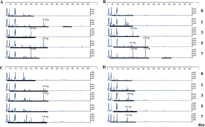 T-RFLP analysis of intestinal microbiota before and after BDL. Data shows T-RFLP patterns of 16S rDNA from mouse feces (day 0~7) digested with HhaI. 16S rDNA were amplified using universal primers 27F and 1492R. The minimum and maximum values of the ordinate of each T-RFLP pattern are 0 to 800 fluorescence intensity (arbitary units) for HhaI. Fecal samples from the rectum of (A) wild and (B) iNOS−/− mice, and the cerum of (C) wild and (D) iNOS−/− mice