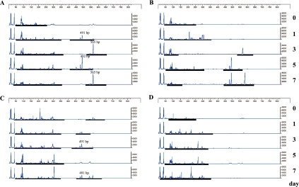T-RFLP analysis of intestinal microbiota before and after BDL. Data shows T-RFLP patterns of 16S rDNA from mouse feces (day 0~7) digested with MspI. Other conditions were same as in Fig. 2.