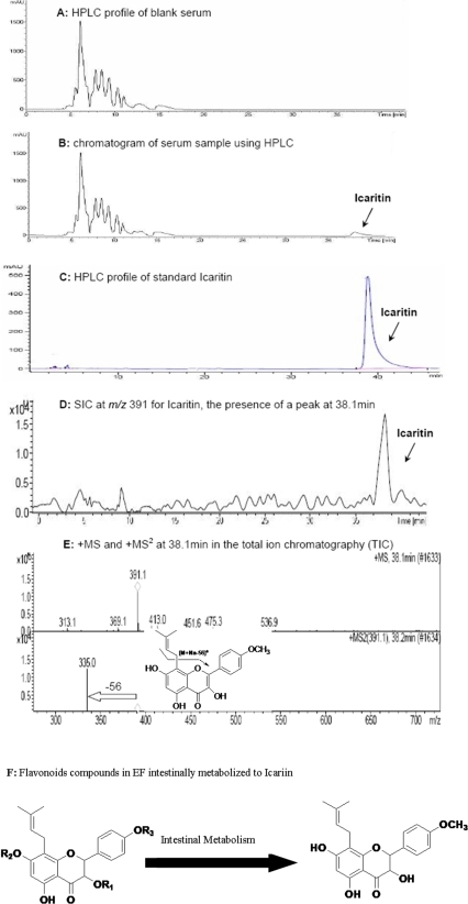 A total ion chromatogram in full scan mode generated by HPLC/UV/MS/MS.(A)∼(B) Compared with the blank sera, a peak shown in 38.1 min in the sera from L-EF, M-EF and H-EF group. (C) HPLC profile of standard Icaritin. (D) 391 (m/z [M+Na]+) for Icaritin selected for the subsequent selected ion chromatography (SIC), with a peak at 38.1 min. (E) The +MS showed the mass weight by 391 ion (m/z [M+Na]+) and the absence of 56 exhibited the existence of prenyl in the +MS2 chromatography. (F) Epimedium-derived flavonoids with common stem nuclei intestinally metabolized to Icaritin.