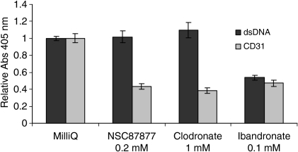 The phosphatase inhibitors NSC87877, clodronate and ibandronate impair HUVEC proliferation. ELISA results showing the inhibitory effect of 0.2 mM NSC87877, 1 mM clodronate and 0.1 mM ibandronate on HUVEC (CD31) and NHDF (dsDNA) grown in co-culture. Data are presented as relative absorbance (tested compound/milliQ water), from three to four independent experiments ± SD. Each experiment was performed in duplicate, n = 6–8.