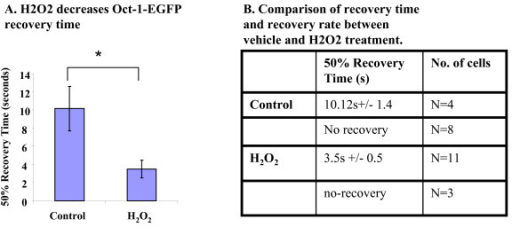 H2O2 stimulates OCT-1-EGFP nuclear import. (A) InR1-G9 cells were transfected with Oct-1-EGFP, and treated with vehicle (control), or H2O2 (100 μM). After photo bleaching of the nuclear fluorescence, the time was recorded for the area to recover to the 50% intensity. (B) Comparison of recovery time and recovery rate between vehicle and H2O2 treated cells.