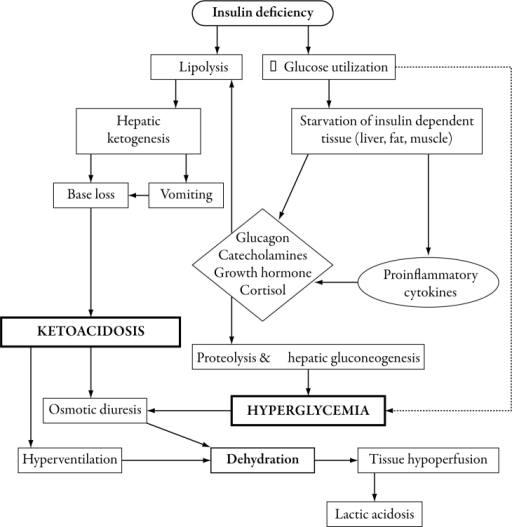 Pathophysiology of diabetic ketoacidosis. Absolute or r