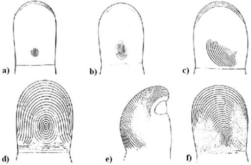 Stages of Fingerprint formation Taken from [9]. Fingerp | Open-i