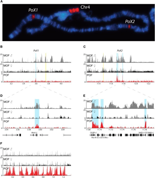 pof binding profiles of the x chromosome regions includ open i