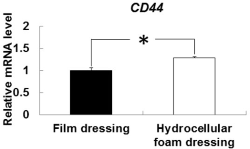 Effects of hydrocellular foam dressing on CD44 mRNA levels in periwound epidermis.CD44 mRNA levels in periwound epidermis were measured by quantitative PCR and expressed as values relative to those of GAPDH. Bars are expressed as mean ± SE (n = 5). *p < 0.05 indicates values that are significantly different from the side of film dressing in rat skin.