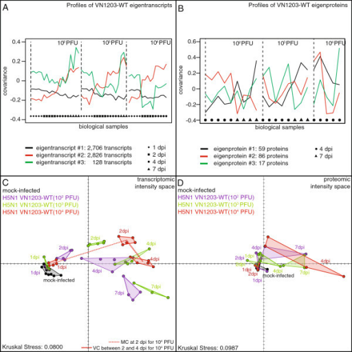 Eigengenes in the kinetics of the VN1203-WT response, and MDS representations of the infected samples. (A) and (B) Profiles of the eigentranscripts and eigenproteins identified in dynamic of the host response to H5N1 VN1203 wild-type. Number of transcripts and proteins correlating with each eigentranscript and eigenprotein are indicated. All the individual shape represent the transcriptomic or proteomic profile of a mice lung infected by the VN1203 wild-type virus. Biological samples have been sorted by inoculation concentrations and then by increasing days post-infection. (C) and (D) Multidimensional Scaling representations of the transcriptomic and proteomic profiles of the H5N1 VN1203 wild-type infected samples. Each dot in the representations is the transcriptomic or proteomic profile of a biological sample plotted in the intensity space of expression signals. Pairwise distances between the dots are proportional to the transcriptomic or proteomic distances between the samples. Transcriptomic and proteomic distances have been calculated based on the signature of 5,660 transcripts and 162 proteins that significantly correlate with one eigentranscript or eigenprotein. Dots are colored in order to indicate the dosage conditions, and biological conditions are indicated by the convex hull of the set of biological replicates and labeled to indicate the time point post-infection. The Kruskal Stress shown in each representation quantifies the quality of the geometrical representation as a fraction of the information lost during the dimensionality reduction procedure. Schematic projections of the Magnitude and Velocity Coefficients are illustrated at 104 PFU in the transcriptomic MDS representation. The Magnitude Coefficient MC at 2 dpi – quantifying the transcriptomic distance between mocks and 2 dpi samples – is illustrated by a dashed red line, and the Velocity Coefficient (VC) at 4 dpi – measuring the velocity between 4 and 2 dpi samples divided by time – is illustrated by an arrow dashed red line.