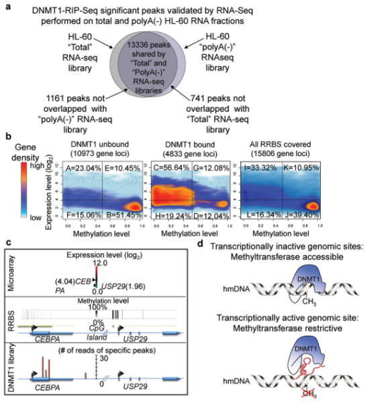 Genome Wide Alignment Of Dnmt1 Bound And Unbound Transc Open I