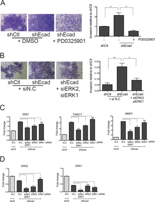 Inhibition of MEK/ERK signaling reduces the EMT phenotypes of shEcad