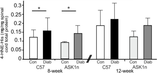Levels of 4-HNE, a marker of oxidative stress, increase in the spinal cord of diabetic mice, this is not prevented or ameliorated by lack of functioning ASK1.4-HNE levels (a secondary product of lipid peroxidation) in spinal cord protein samples, are higher in diabetic mice than in spinal cords obtained from control mice (C57 and ASK1n mice after 8 and 12 weeks of diabetes; *p<0.05, overall in a 2-way ANOVA, although not significantly different in post hoc tests n = 5). Data are expressed as mean values + SD.