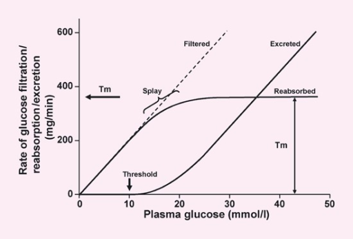 Renal glucose handling. Tm, transport maximum. Adapted with permission from Silverman & Turner (1992) 32. Copyright © 1992 by the American Physiological Society. By permission of Oxford University Press Inc.