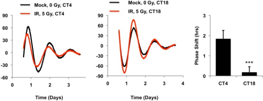 Circadian time of exposure determines phase shift in response to DNA damage.Typical results of continuous monitoring of luciferase activity from mouse embryonic fibroblasts expressing Per2::Luciferase treated with 0 (black curves) or 10 Gy (red curves) ionizing radiation 4 (CT4) or 18 (CT18) hours after circadian synchronization with 1 μM dexamethasone. Data represent the mean luciferase counts of six samples per condition from one of two independent experiments. Right: quantitation of the differences in initial circadian phase of luciferase activity caused by irradiation. Data represent the mean ± propagated s.d. difference between initial phase in Mock vs irradiated samples for six samples per condition. ***p < 0.001 for a significant interaction between CT and irradiation by 2-way ANOVA.DOI:http://dx.doi.org/10.7554/eLife.04883.013