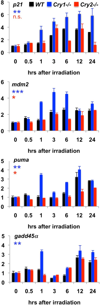 Transcriptional response to irradiation-induced DNA damage.Expression of the indicated transcripts was measured by quantitative PCR (qPCR) in cDNA prepared from wild-type (black), Cry1−/− (blue), and Cry2−/− (red) fibroblasts at the indicated times following exposure to 5 Gy irradiation.DOI:http://dx.doi.org/10.7554/eLife.04883.018