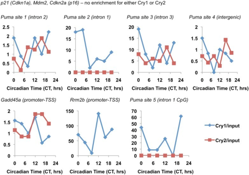 Circadian pattern of Cry1 and Cry2 binding to selected chromatin sites.Association of Cry1 (blue) or Cry2 (red) with chromatin at the indicated locations in ChIP sequencing data set published by Koike et al. (2012). Data represent the reported Cry1 or Cry2 signal normalized to the reported 'input' signal for each locus.DOI:http://dx.doi.org/10.7554/eLife.04883.019