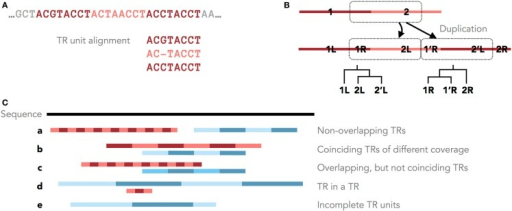 Tandem repeats in genomic sequences. (A) An example TR with three units and the corresponding MSA of its units. (B) Different parts of a TR motif (R = right and L = left) have different histories after a single duplication with shifted TR units. Shown are these duplication histories as phylogenies of the right and left parts of the TR motif. (C) Five scenarios of overlapping and non-overlapping TR annotations.