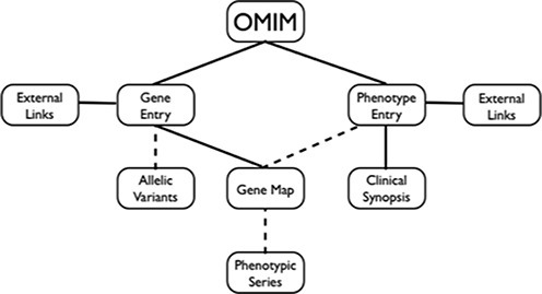 Diagram of OMIM content. Dashed lines indicate that not all genes have allelic variants; not all phenotypes are mapped; and mapped phenotypes are not necessarily part of a Phenotypic Series.