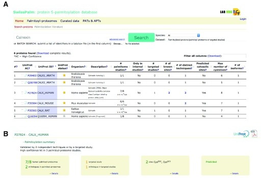 "Search and result page.A: SwissPalm search page: Example of query for ""calnexin"" shows that it has been found in palmitoyl-proteomes from several species: human (7 out of 8 screens), mouse (6 out of 6), rat (1 out of 1) andArabidopsis thaliana (1 out of 1). For human, mouse and rat calnexin was classified as a high confident hit and for human and mouse identified by two independent techniques (metabolic labeling and chemical capture). Finally, calnexin S-palmitoylation was also subject to targeted studies and 2 cysteine residues (502 and 503 in human calnexin) were identified.B: Results Page from human calnexin display summary boxes containing the main information related to S-palmitoylation: number of occurrences in palmitoyl-proteome screens and targeted studies, sites information, cysteine prediction."