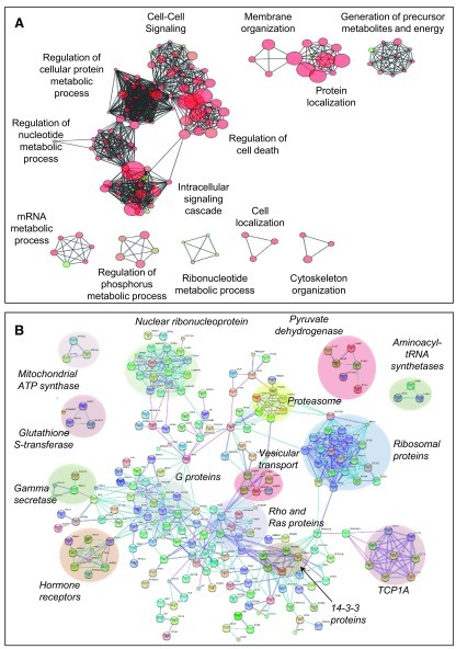 Ontology and network analysis of S-palmitoylated proteins.A: GO term analysis of 470 human S-palmitoylation hits found by 2 independent techniques or by targeted studies. GO terms sharing the same biological functions enriched in S-palmitoylation Hit proteins are clustered. The distance between GO terms corresponds to the inverse numbers of proteins common to the two terms and the size of the circle to the number of proteins associated with the GO term.B: Protein-protein interactions networks analysis of 470 human S-palmitoylation hits found by 2 independent techniques or by targeted studies using STRING software. The interactions (high confidence score > 0.9) are shown in evidence view (pink: experimental evidences and blue database evidences).
